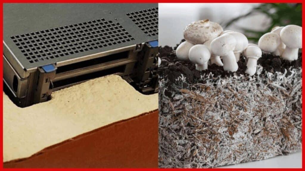 biodegradable packaging electronics mushroom